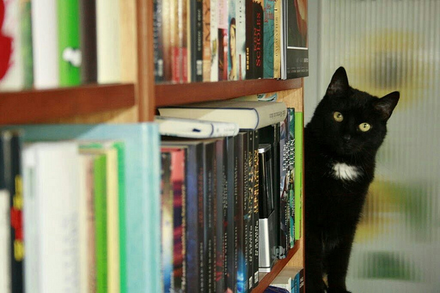 Sossi loves books by bibliothekarin, on Flickr